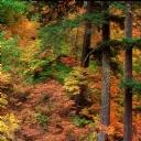 Renkli Ağaçlar 2