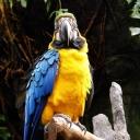 Renkli Papağan