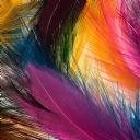 Renkli Tüy