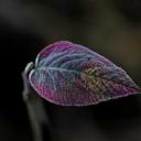 Renkli Yaprak