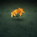 Sarı Çiçek 3
