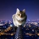 Sevimli Kedi 2