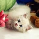 Sevimli Kedi 3