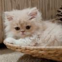 Sevimli Kedi 5