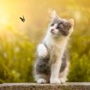 Sevimli Kedi 6