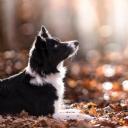 Sevimli Köpek 1