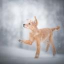 Sevimli Köpek 6