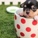 Sevimli Köpekçik