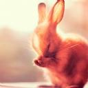 Sevimli Yavru Tavşan