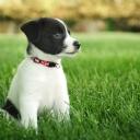 Siyah Beyaz Köpek