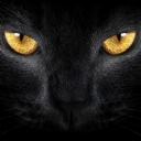 Siyah Kedi 1