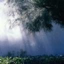 Svoya Sağnak Yağmur