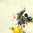 Tasarım Renkli Kuş