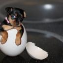 Tatlı Köpekcik
