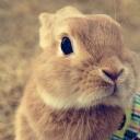 Tatlı Tavşan