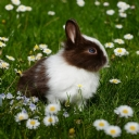 Tavşan 2