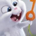 Tavşan 4