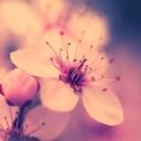 Toz Pembe Çiçek 2