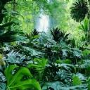 Tropik Ağaçlar ve Orman