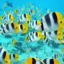Tropik Balık