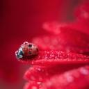 Uğur Böceği 10
