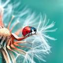 Uğur Böceği   12