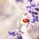 Uğur Böceği    13