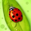 Uğur Böceği 3