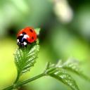 Uğur Böceği 7