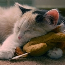 Uyuyan Kedi