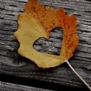 Yaprak Kalp