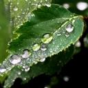 Yaprak üzerindeki Yağmur