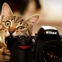 Yaramaz Kedi 3