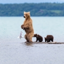 yavru ayılar
