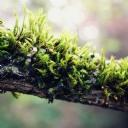 Yeşil Ağaç