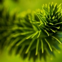 Yeşil Bitki 1