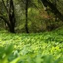Yeşilliliklerin süslediği Orman