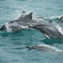 Yunus Balığı
