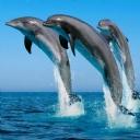 Yunus Balıkları 1